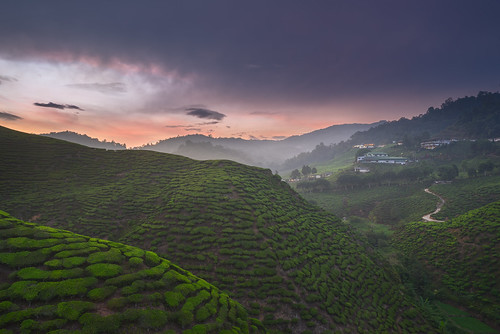 road sunset verde green clouds wonderful casa cloudy tea farm hills adventure explore malaysia plantation colourful cameronhighlands discover apus ceai plantatie