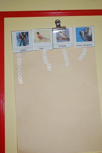 jl birds 001