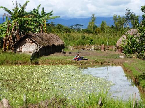 Papua13-Wamena Nord-Wosilimo (40)