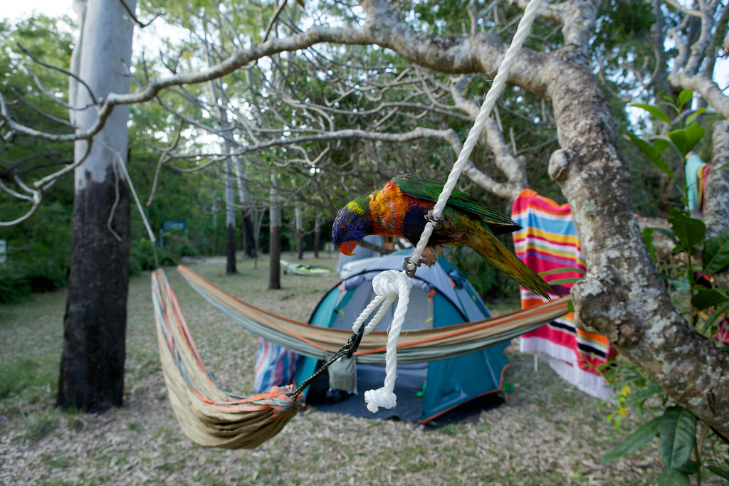 Our tent on Magnetic Island