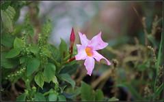 FLOWERS #5