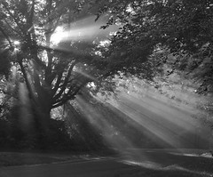 Sunsoaked foggy tree