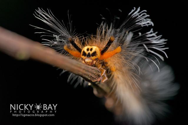 Skull-Faced Caterpillar - DSC_0849