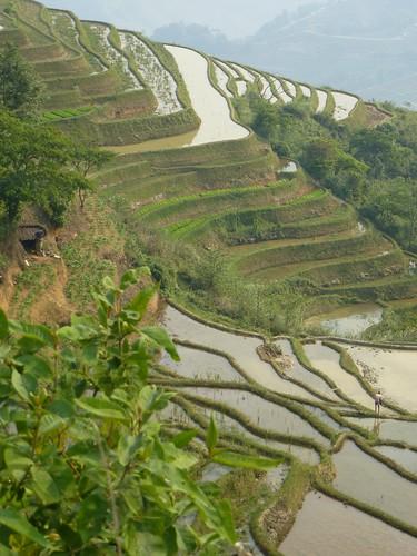 Yunnan13-Yuanyang 21 (14)