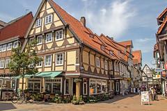 Lüneburger Heide Juni 2013