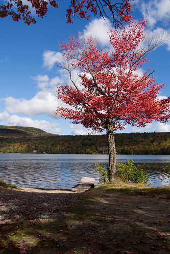 autumn sky tree fall water leaves clouds forest pond woods unitedstates maine foliage jackman boatlaunch parlin