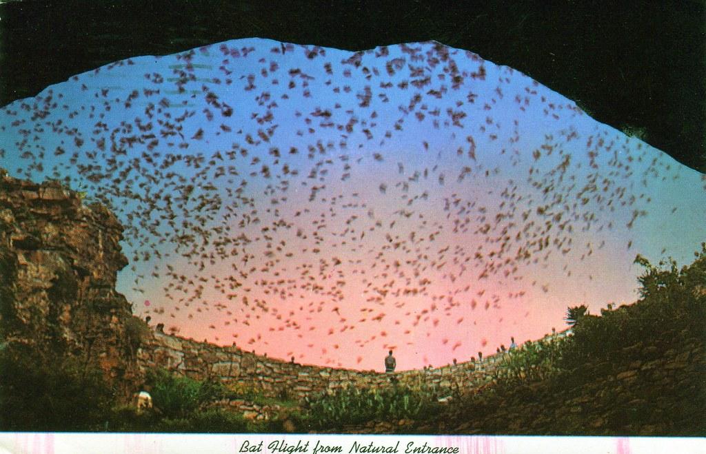 Carlsbad New Mexico - Postcard: Carlsbad New Mexico