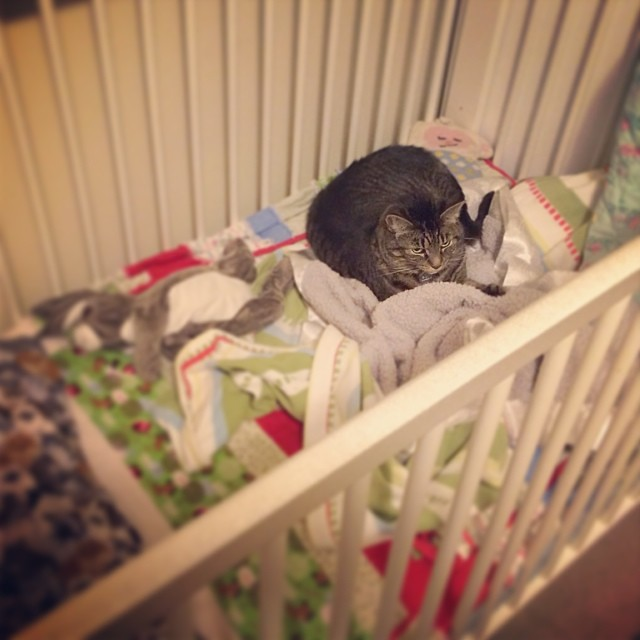 Cat Caught in a Crib. #cats