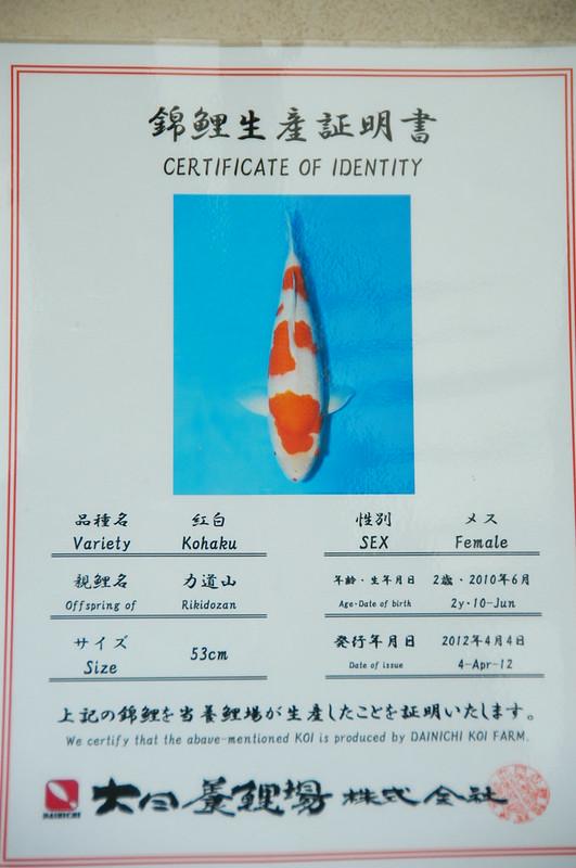 certificaat kohaku dainichi