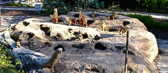 Legoland, Florida - meerkats art - safari ride