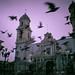 Bandada de palomas en Cordoba