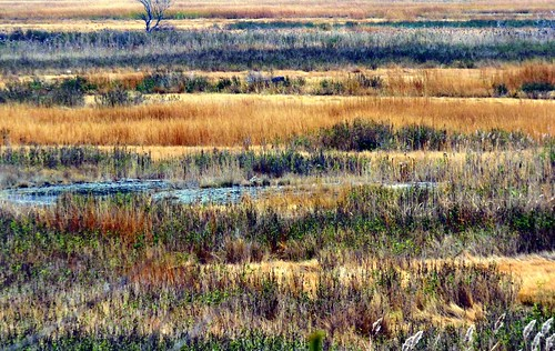 november color marsh wetland jaym 2013 saugusma rumneymarsh mahler9 chromocosm andantecomodofotos