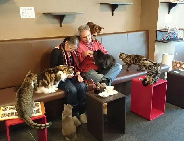 parents at the cat cafe