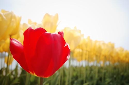 flowers 8