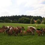 kozy-krasolesi