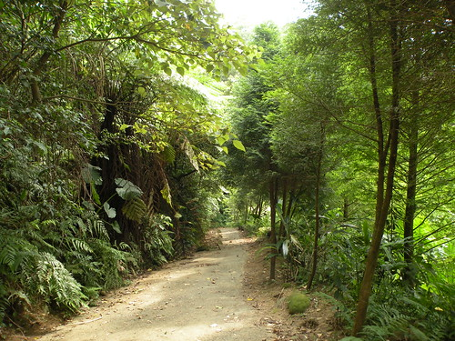 自然谷步道。圖片來源:道法自然生態探索團隊
