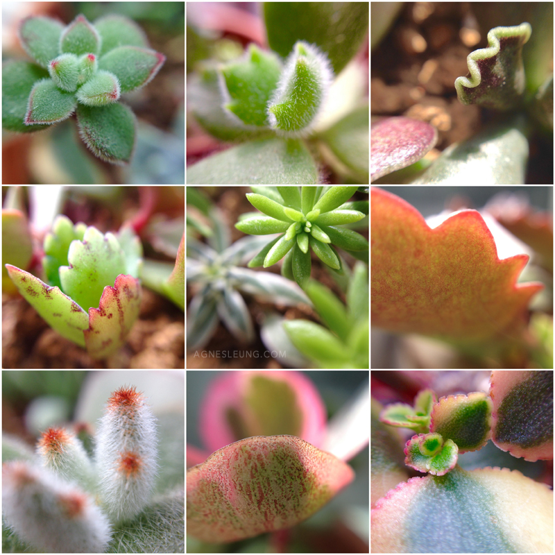 jan-succulents-2015