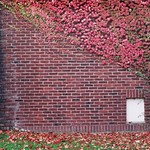 Wall and leaves
