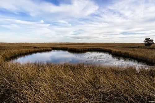 winter marsh fortfisher wilmingtonnc basintrail sonyilce7r sel1635z