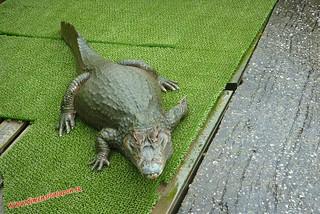 P1060611 Cocodrilos en el  Infierno Oni Yama Jigoku (Beppu) 13-07-2010