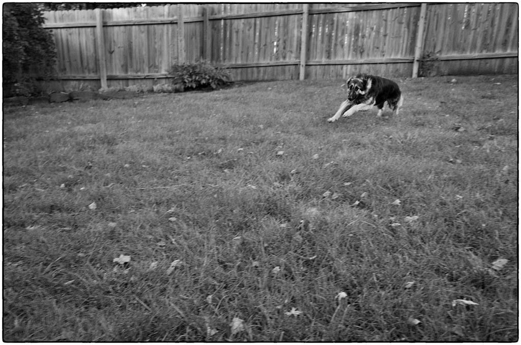 Speedy Dog, October 04, 2014