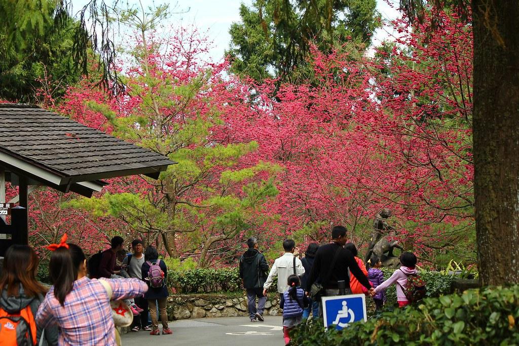 九族櫻花祭 (169)