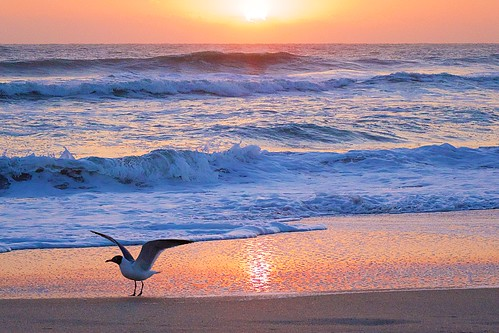 ocean beach sunrise dawn sand surf florida seagull indialantic