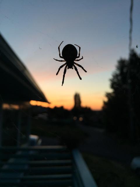 Spider Dusk