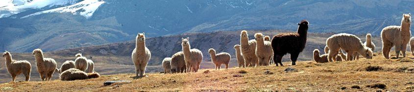 Peru Trekking Cordillera Vilcanota. In der Vilcanota. Foto: Günter Hane.