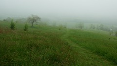 Foggy hike on Piedmont Overlook trail above Sky Meadows State Park 3