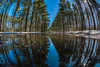 Forest Reflections.jpg by ~~^~~Sharky