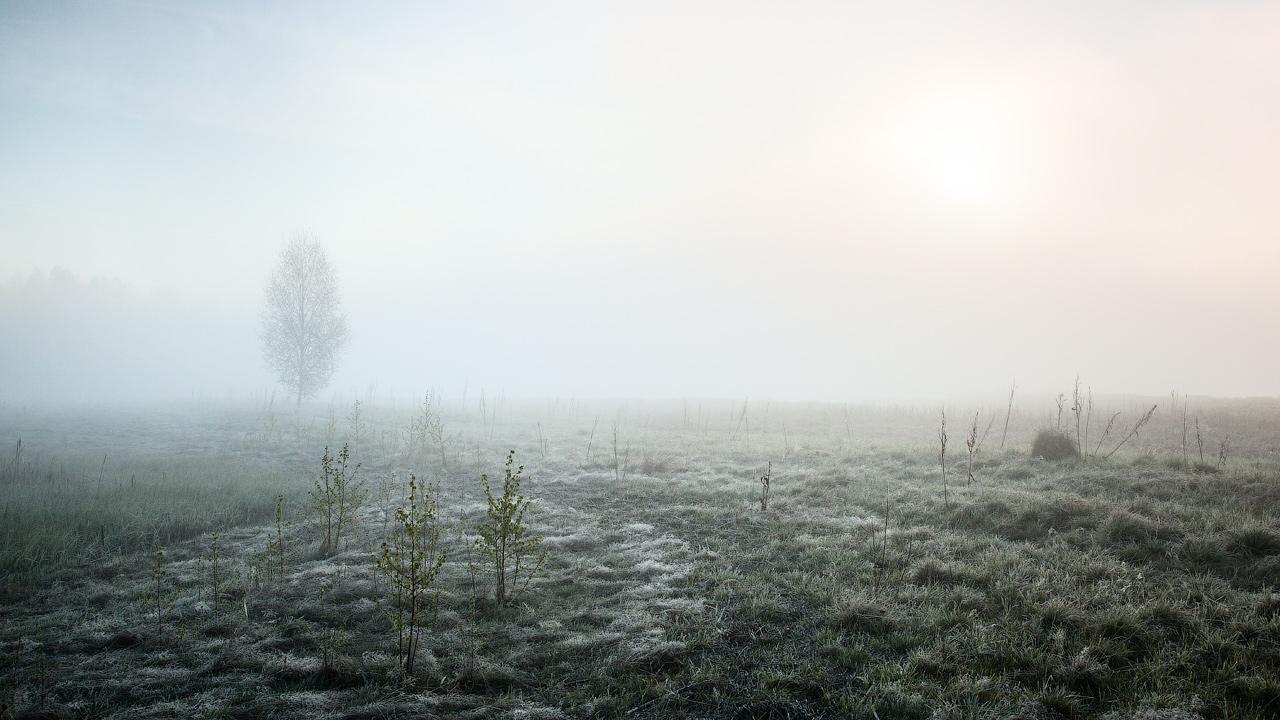 Туманное утро (Misty morning)