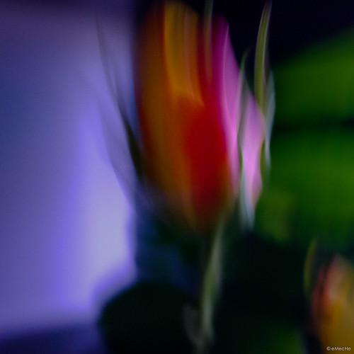 oscuros días de mayo by eMecHe