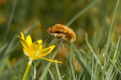 Finding Honey
