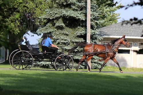 IMG_0191_Amish_Buggy