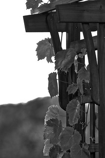 Weekly Photo 26/52 for 2013: Grape Arbor by Kristen Koster on Flickr