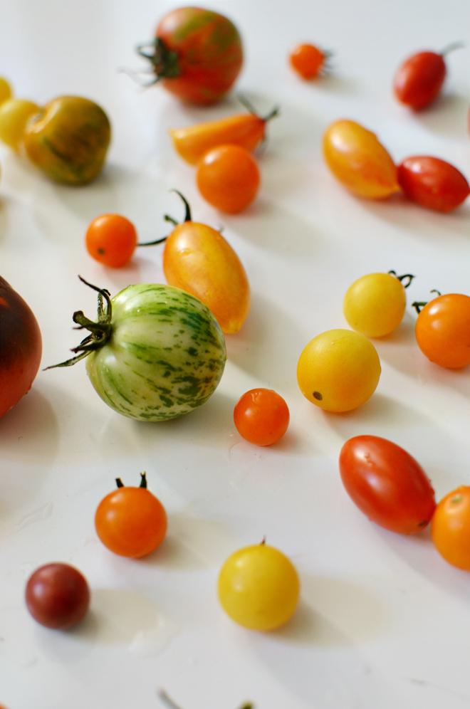 first tomato batch 2013
