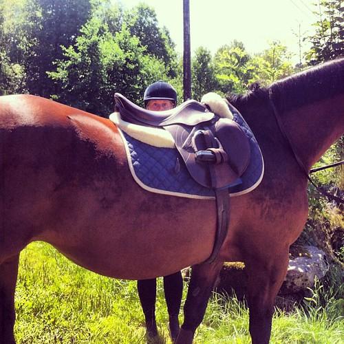 Stor hest.