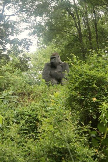 Atlanta Zoo '13, 6