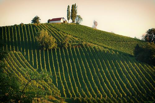 sunrise österreich nikon vineyards nikkor sonnenaufgang vr afs steiermark weinberge südsteiermark 1685 ratsch d7100 southstyria ratschanderweinstrase