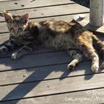 Coney Island Boardwalk Cats