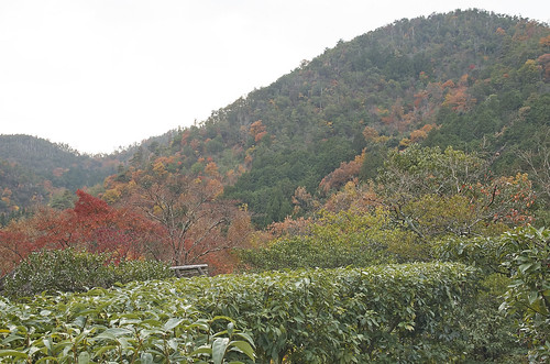 【写真】2013 紅葉 : 光悦寺/2013-12-02/IMGP4438