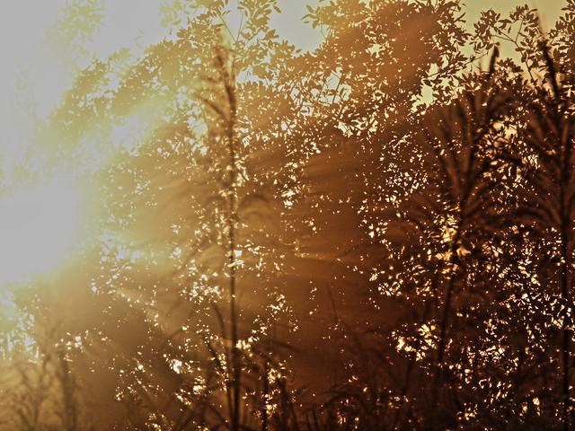 Sunburst 20140224