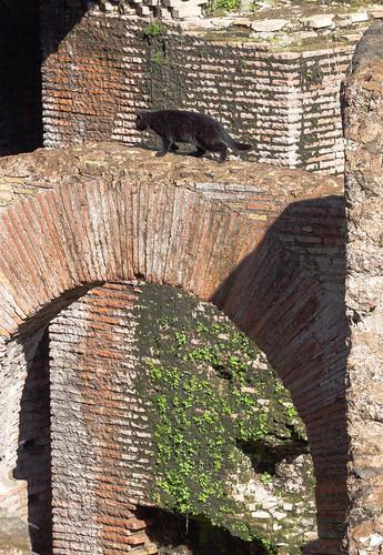 Katze im Colosseum; copyright 2014: Georg Berg