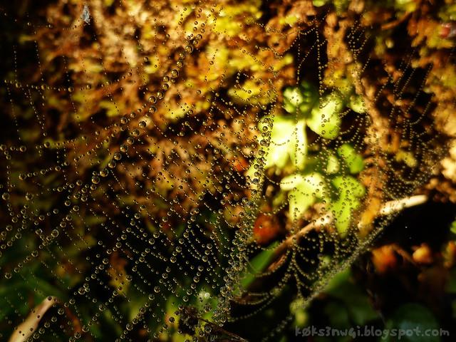 Bike Trip Pha Ngeun Spider Dew