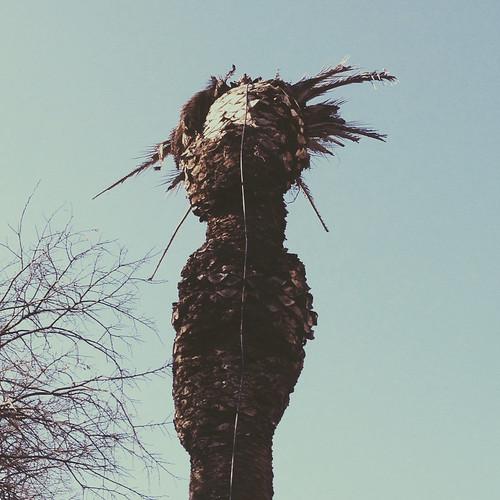 palmeiras mortas