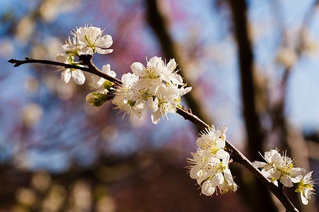 Spring Time 24