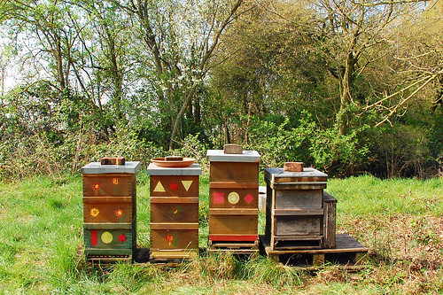 Bienen imkern Imkerei Neckarhausen