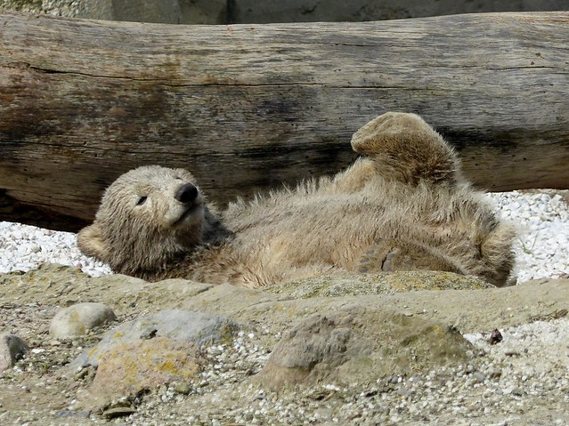 """Polarbear Lale, my favorite pic today for the album """"Augenweide"""" ;-)"""
