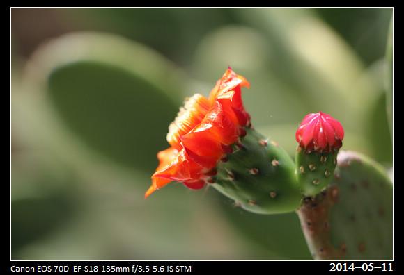 20140511_Flower2